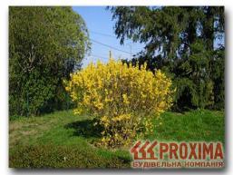 Посадка кустарников и деревьев на дачном участке.  Правила удачной посадки кустарников и деревьев вокруг частного...