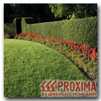 Живая изгородь для украинских