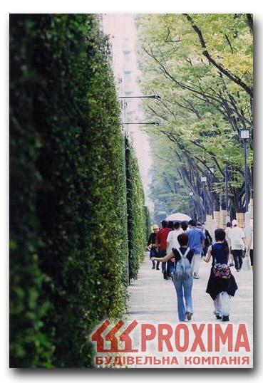 Вечнозелёные изгороди проектирование